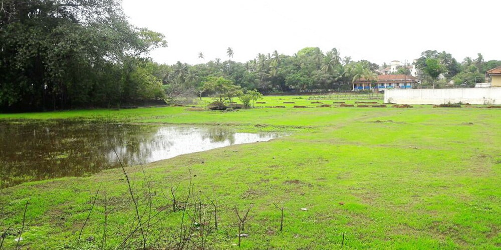 Goa in June: full of greenery