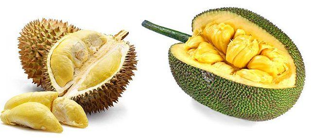 Jackfruit and Durian