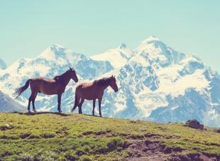 Прогулки на лошадях в горах Северного Кавказа. Отель Адиюх-Пэлас. Хабез, Карачаево-Черкесия.