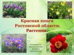 Природа ростовской области фото – Растения, занесенные в Красную книгу Ростовской области. Редкие и исчезающие виды растений Ростовской области